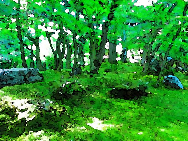 青紅葉が美しい季節